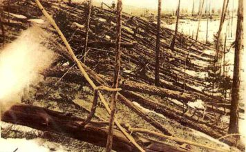 Imatge de com van quedar els arbres estesos i cremats- Foto: Wikimedia Commons