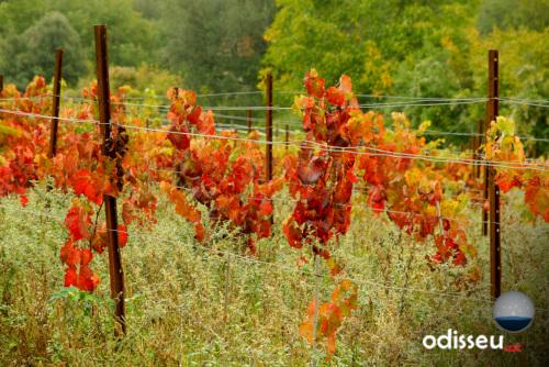 En poc més de 7000 anys, el procés de la producció de vi havia viatjat del Càucas fins la Mediterrània més oriental.Vinyes.(Autor; Eugeni Junyent)