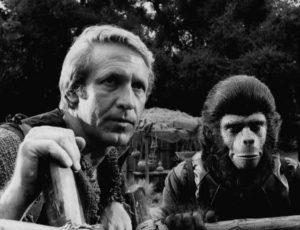 La pel·lícula El Planeta dels simis (1968) juga amb a possibilitat que altres espècies de simis poguessin adquirir raonament cognitiu, sense perdre les seves facultats físiques ni un total caminar bípede. Foto: Wikimedia Commons